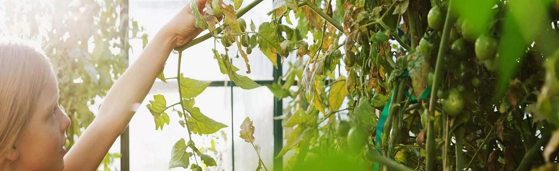 kerti üvegáz